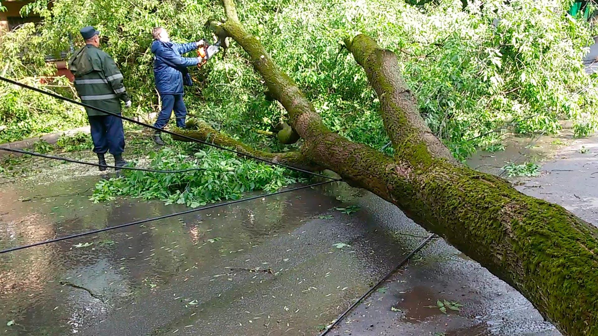 На Тисмениччині дерево впало на дорогу та перекрило рух автотранспорту